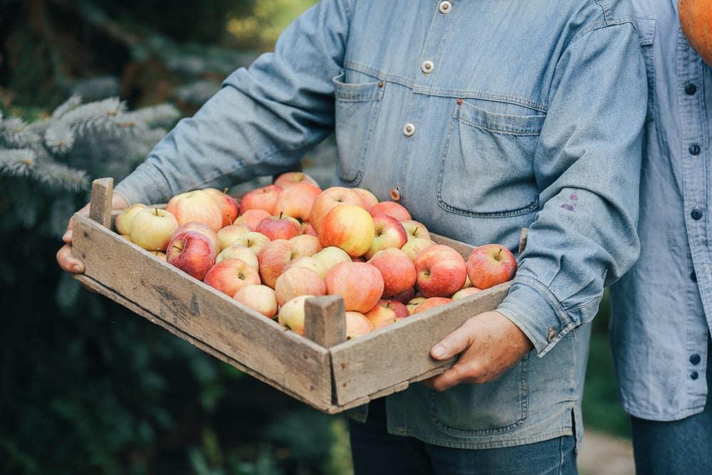 Pessoa carregando uma caixa repleta de maçãs.