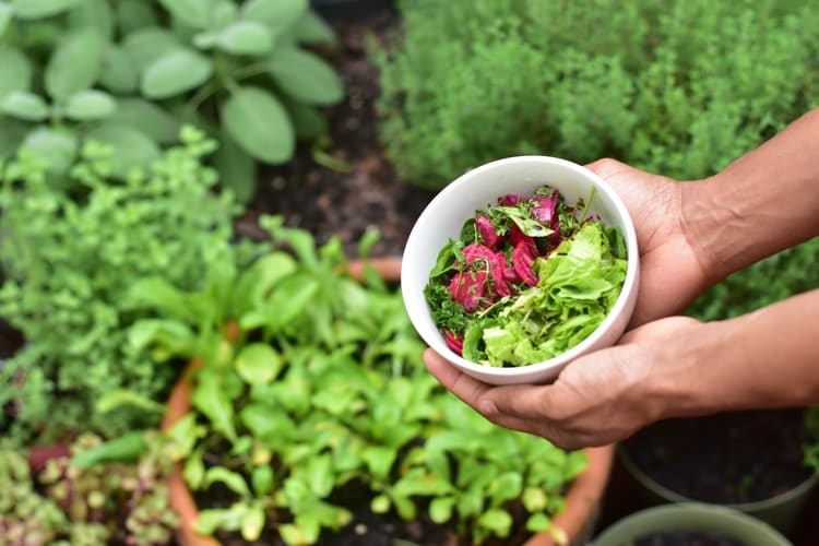 Pessoa colhendo legumes de horta comunitária.