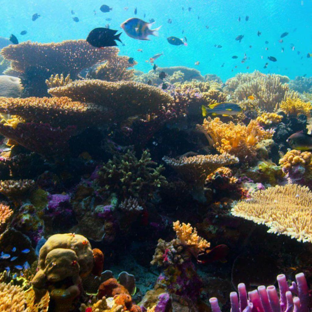 Recifes de corais com peixes e pedras ao redor.